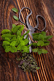 Mentha. Aromatic culinary herbs, mint.