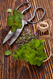 Aromatic culinary herbs, mint.