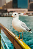The seagull sits on a handrail