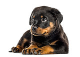 Rottweiler puppy isolated on white