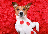 dog love rose valentines