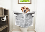 dog on toilet seat reading newspaper