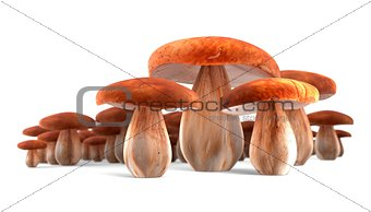 Ceps mushrooms isolated on white 3d illustration