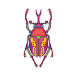 Colorful Scarab Beetle Bug Insect