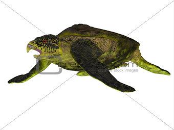Archelon Turtle Body