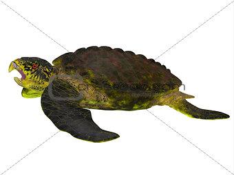 Archelon Turtle Side View