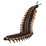 Arthropleura Invertebrate
