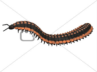 Arthropleura Side Profile