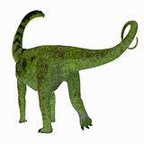 Puertasaurus Dinosaur Tail