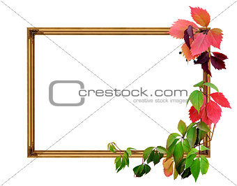 Frame and leaves