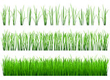 Shoots of green grass