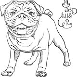 vector sketch cute dog black pug breed