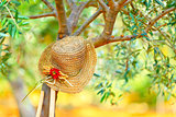 Womens hat on the tree