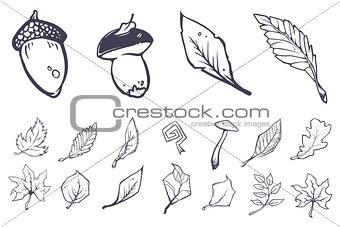 Sketch leaves elements set