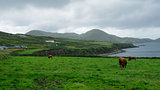 Irish coast landscape