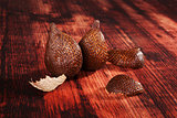 Salak fruit background.