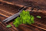 Aromatic culinary herbs, mint.