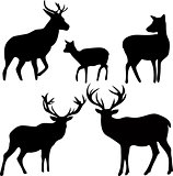 deer and roe silhouettes on the white background