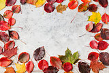 Colorful autumn leaves on a grey stone background. Top view. Copy space