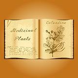 Greater celandine. Botanical illustration. Medical plants. Book herbalist. Old open book