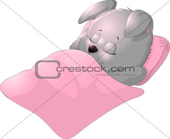Sleep bunny on a white background