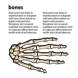 medically accurate illustration of the hand bones