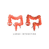 Healthy vs Unhealthy Large Intestine Infographic Illustration
