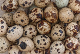 Quail eggs background