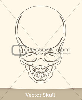 skull illustration isolated on white background. Vector mode