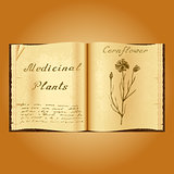 Cornflower. Botanical illustration. Medical plants. Book herbalist. Old open book