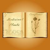 Cornflower. Botanical illustration. Medical plants. Book herbalist. Old open book