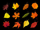 Autumn leaves tags isolated on black background. Vector illustration