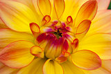 Yellow flower in macro view