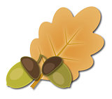 Two acorns and oak leaf