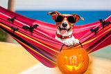 dog on hammock on halloween