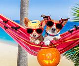 dogs on hammock on halloween