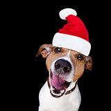 christmas santa claus dog isolated on black