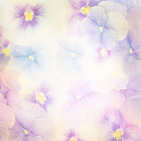 Violet Flowers Background