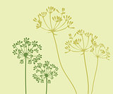 Vector Fennel Flower
