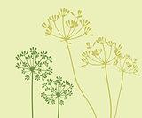 Vector Fennel Flower