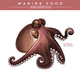 Octopus. Marine Food