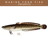 Ling. Marine Food Fish