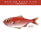 Sebastes. Marine Food Fish