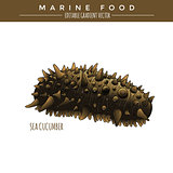Sea Cucumber. Marine Food