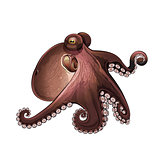 Octopus, Isolated Illustration