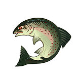 Salmon, Isolated Illustration