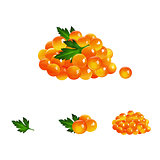 Red Caviar, Isolated Illustration