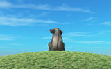 Elephant sits atop a hill