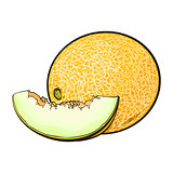 Ripe and juicy yellow melon isolated on white background