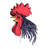 profile of cock